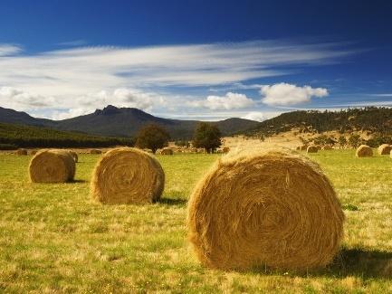 Как местные советы должны учитывать личные крестьянские хозяйства