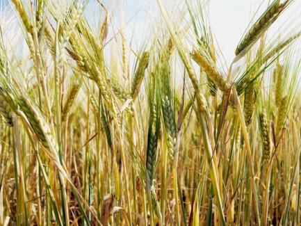 Порядок представления и уточнения налоговой отчетности по НДС сельхозпроизводителями