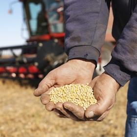 Фискалы напомнили о налогообложении НДС зерновых и технических культур