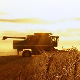 Налоговая преднамеренно блокирует аграриям дополнительные НДС счета