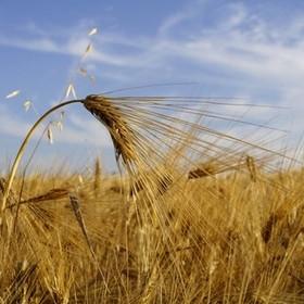 Администрирование НДС для аграриев могут пересмотреть по итогам I квартала